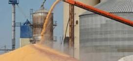 Los exportadores e industriales ya compraron 14,7 millones de toneladas de granos