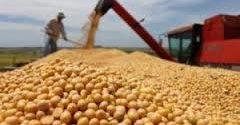 La soja se mantendrá estable con posibilidades alcistas en Argentina