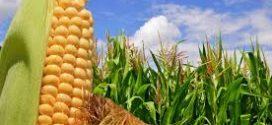 Se simplifican las exigencias a productores y operadores de granos