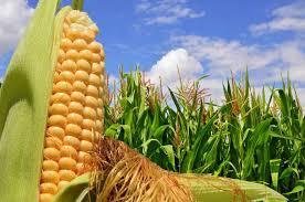 Ya rige el nuevo Sistema de Certificación de Productos de Origen Vegetal para exportación