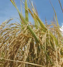 Buscan crear una ventanilla única para la exportación de granos