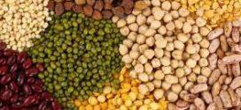 Oportunidad comercial para Exportadores de Legumbres de Argentina