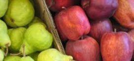 Dos buques partirán de Río Negro a Europa y EE.UU para exportar fruta