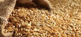 La Argentina está en el top ten de los mayores productores y exportadores de semillas
