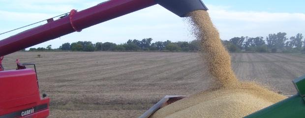 Por la demanda china, cae el stock mundial de granos