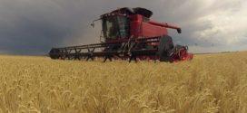 Las industrias molineras de trigo partieron en misión comercial a Brasil